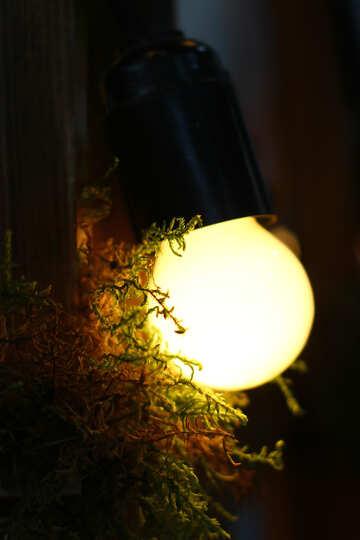 Vecchia lampada ad incandescenza №46951
