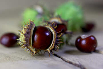 Beautiful conker on a wooden background №46465