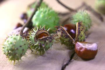 Beautiful horse chestnut №46439