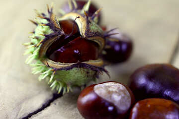 Horse-chestnut fruit №46495