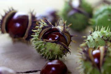 Horse-chestnut fruit on wooden background №46479