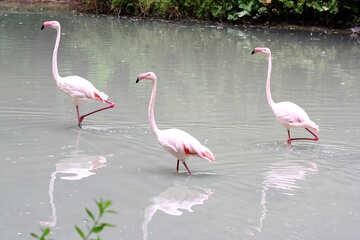 Pink flamingos №46107