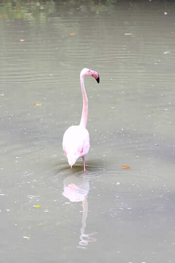 Bird flamingo №46109