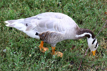 Uccello acqua grigia №46138