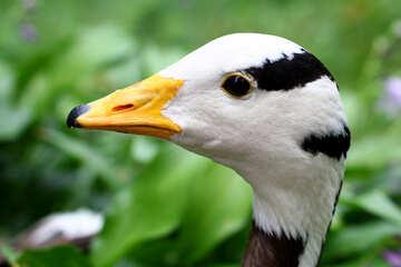Testa di uccelli selvatici №46133