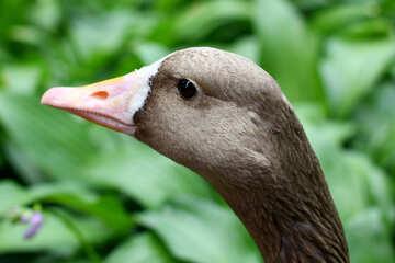 Testa di uccelli selvatici №46134