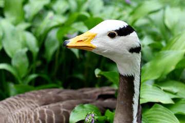 Testa di uccelli selvatici №46128