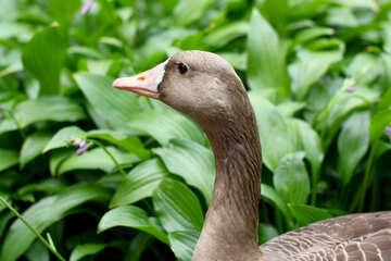 Testa di uccelli selvatici №46129
