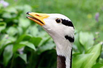 Wild bird head