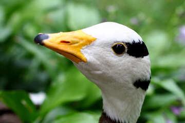 Wild bird head №46132