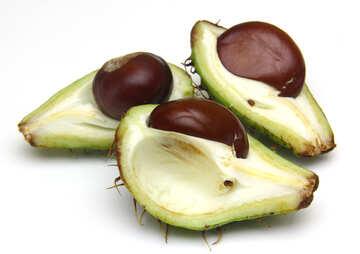 El castaño de indias aislado en un fondo blanco fruta abierta №46374