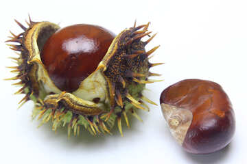 Conker isolated on white background №46425