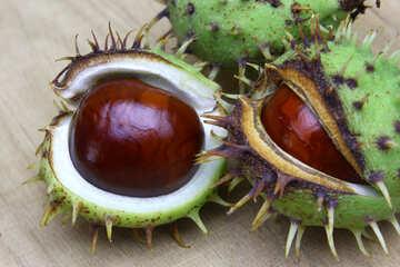 Horse chestnut on wooden background open koyuchie fruits №46346