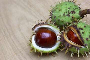 Horse chestnut on wooden background open koyuchie fruits №46347