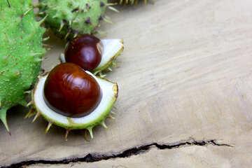 Horse chestnut on wooden background open koyuchie fruits №46353