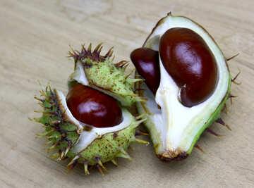 Horse chestnut on wooden background open fruit №46365
