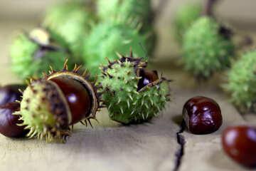 Horse-chestnut fruit on wooden background №46472
