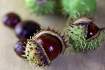Horse-chestnut fruit on wooden background №46475