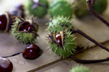 Horse-chestnut fruit on wooden background №46476