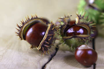 Beautiful conker on a wooden background №46463