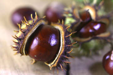 Beautiful conker on a wooden background №46468