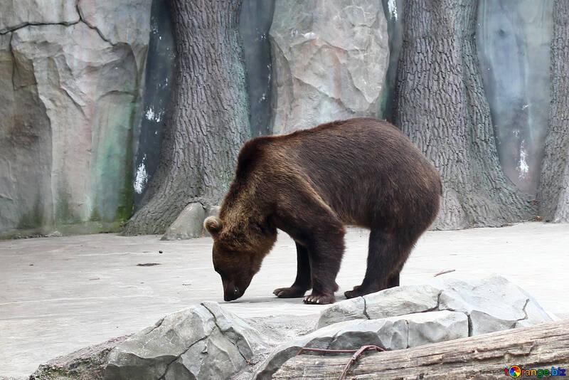 Bear №46057