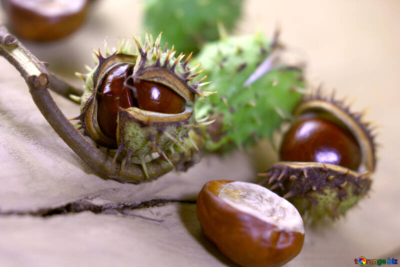 Beautiful picture with conker №46443