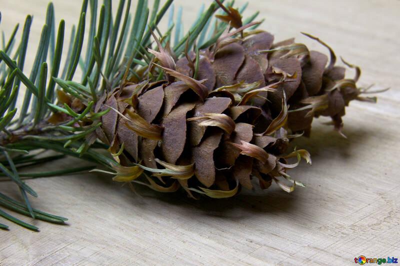 Branche de pin avec cône №46322