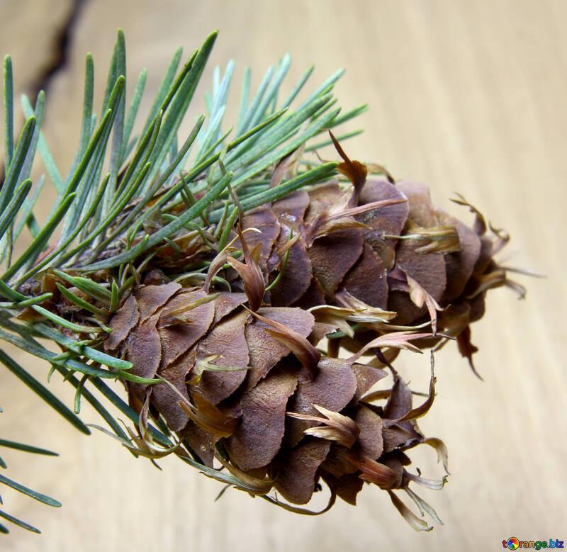 Branche de pin avec cône №46330
