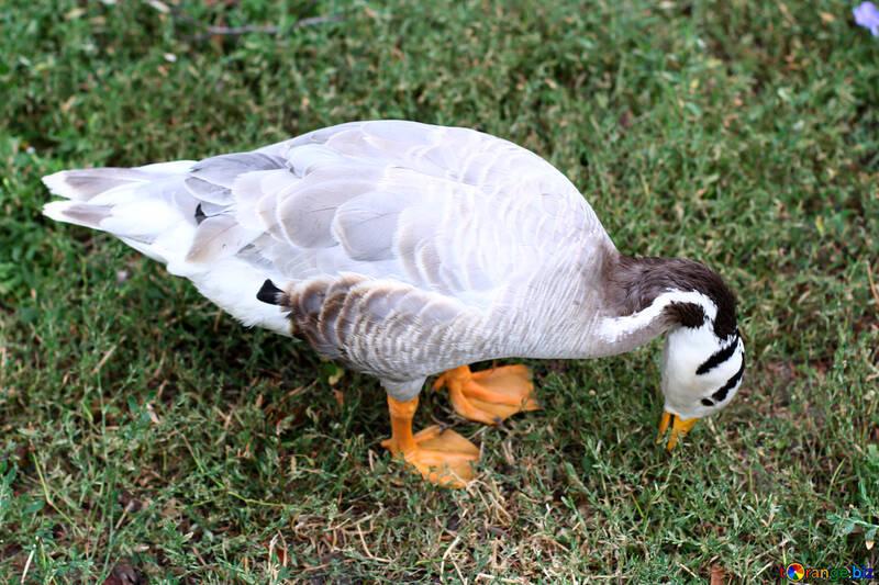 Oiseaux d`eau grise №46141