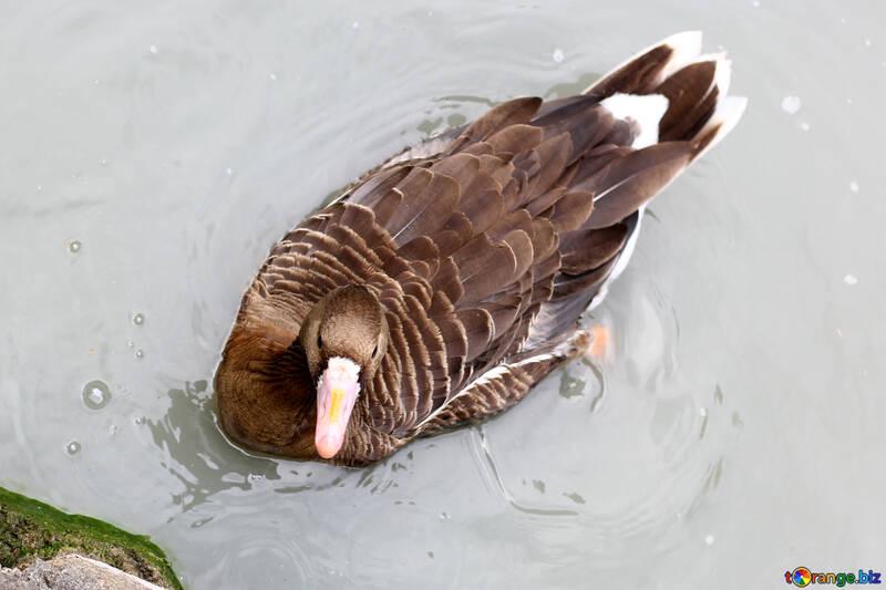 Oiseau sur l`eau №46113