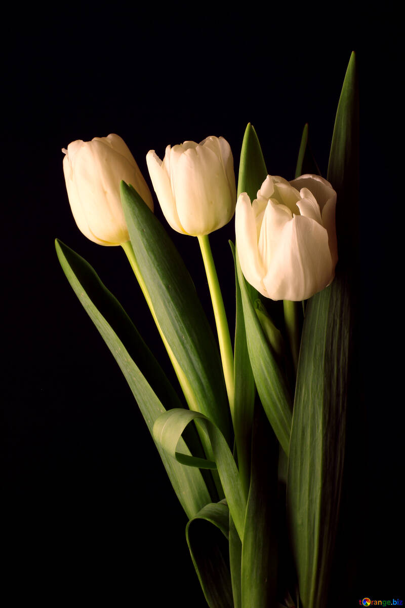 Tulips bouquet on a black background №46268