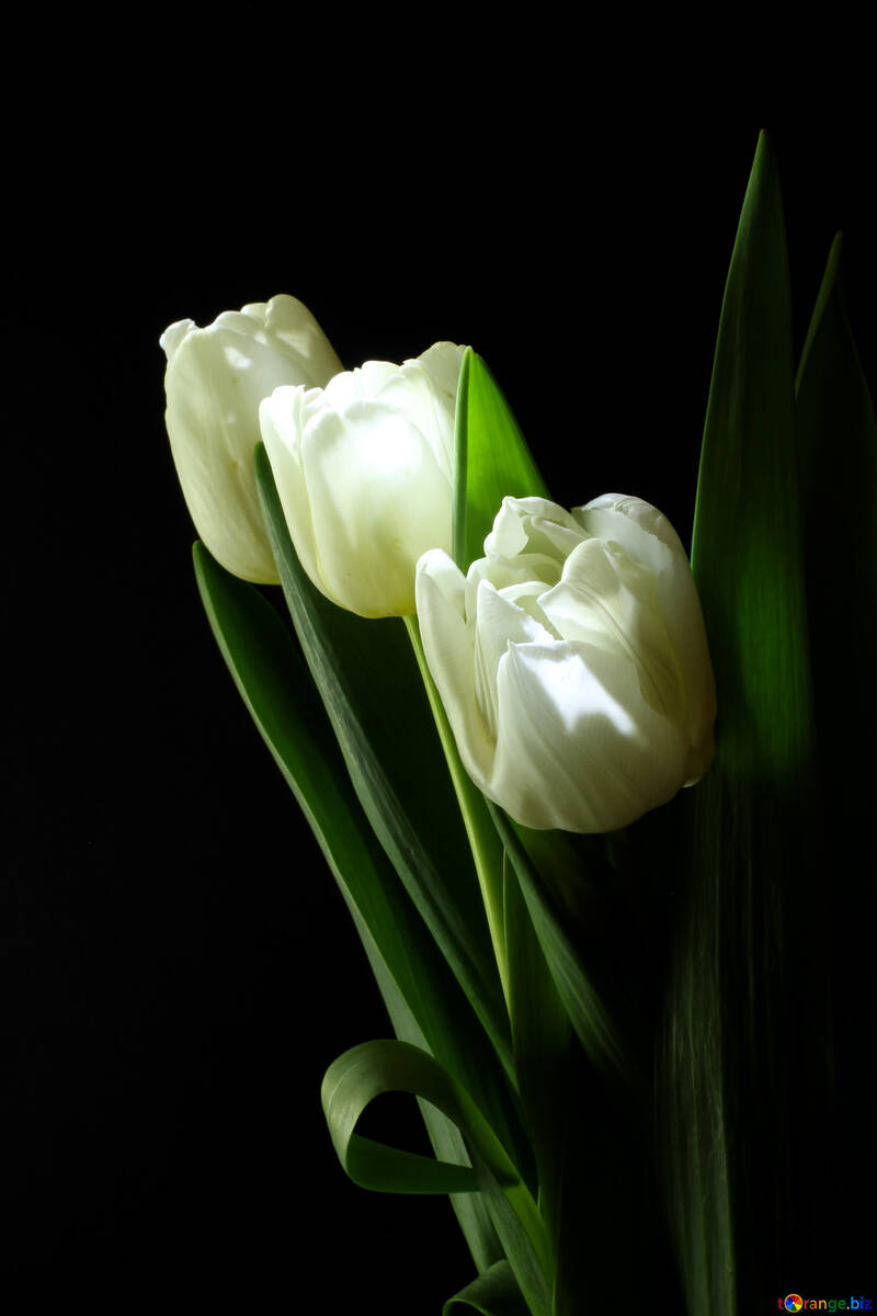 Tulips bouquet on a black background №46273
