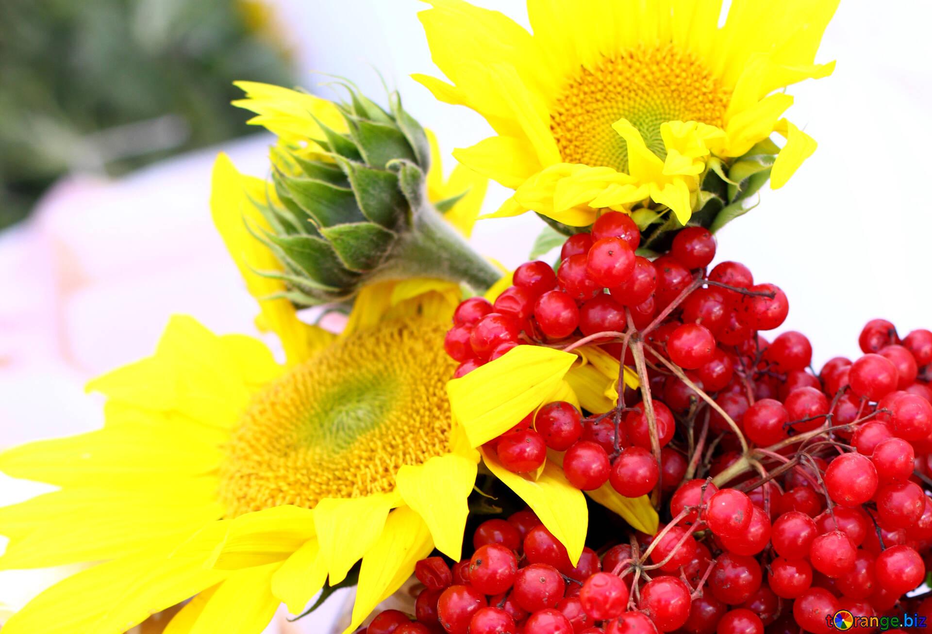 Букет калины означает, цветы доставкой нижнем