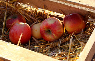 Natural apples in a wooden box on hay №47360
