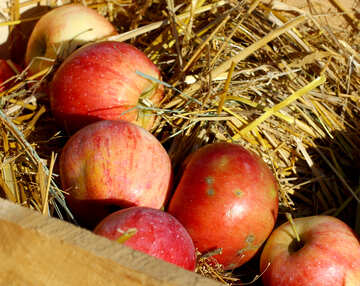 Natural apples in a wooden box on hay №47363
