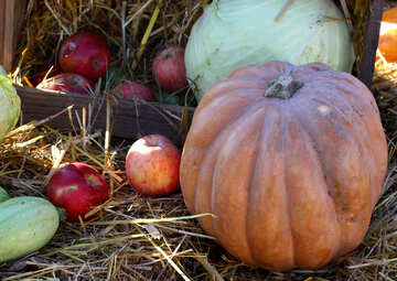 Pumpkins and Apples in the hay №47297