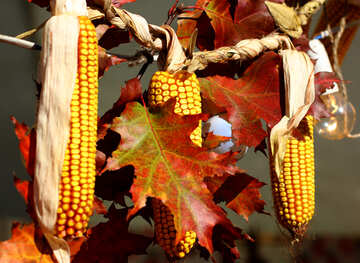 Autumn decor of maize corn №47402