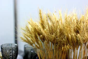 Dry corn ears №47169