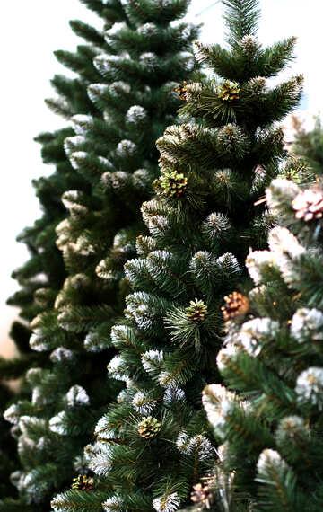 Beautiful Christmas tree №47644