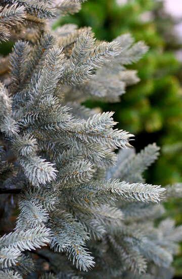 Bellissimo albero di Natale №47631
