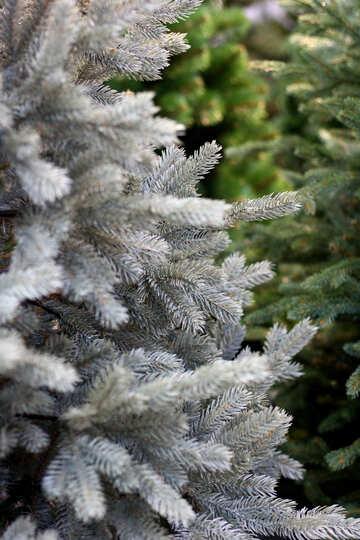 Beautiful Christmas tree №47632