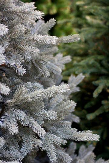 Beautiful Christmas tree №47633