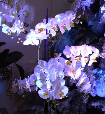 White orchids in a blue light №47662
