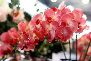 Sale of orchids