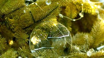 Glas Weihnachtskugel auf einem Zweig eines Weihnachtsbaums №47710
