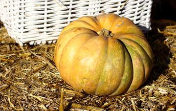 Pumpkin on the hay №47306