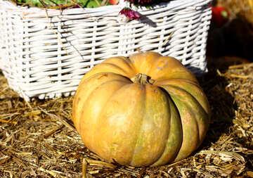 Pumpkin on the hay №47307