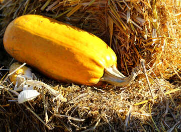 Pumpkin on the hay №47341