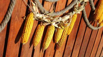 Autumn decor of  maize corn №47395
